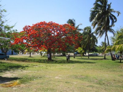 6-Climate-Tree-1024x768
